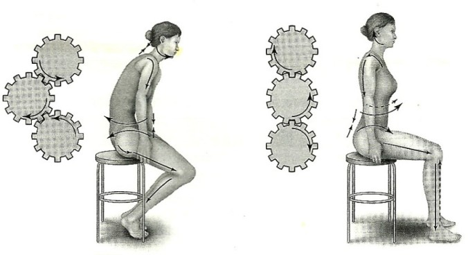 cog spine